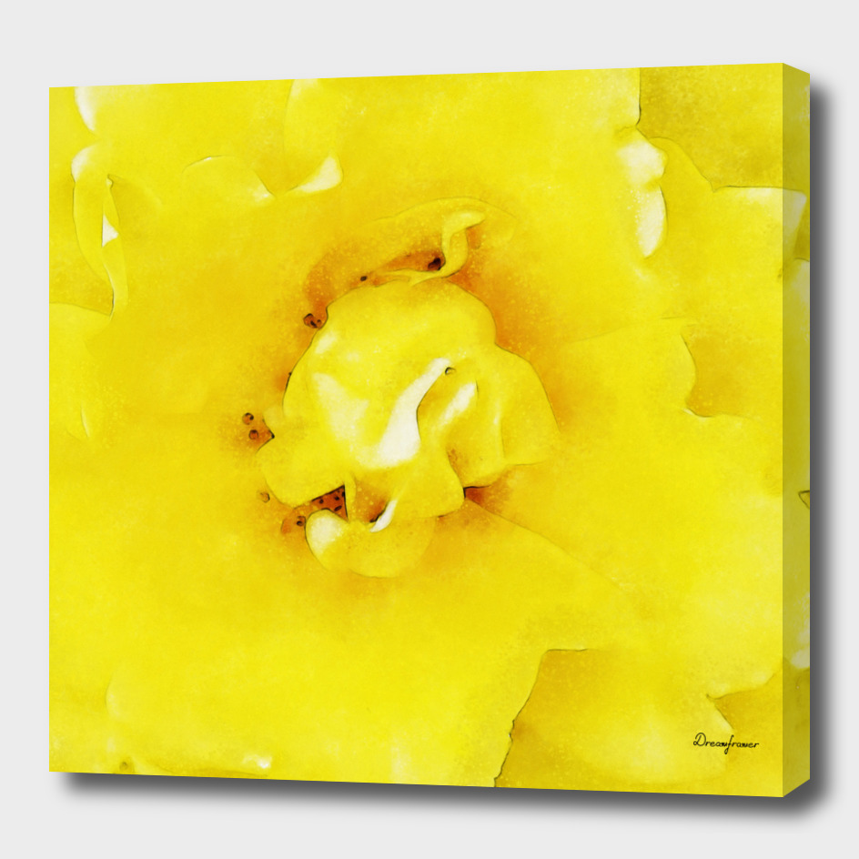 Closeup Yellow Rose Fine Art