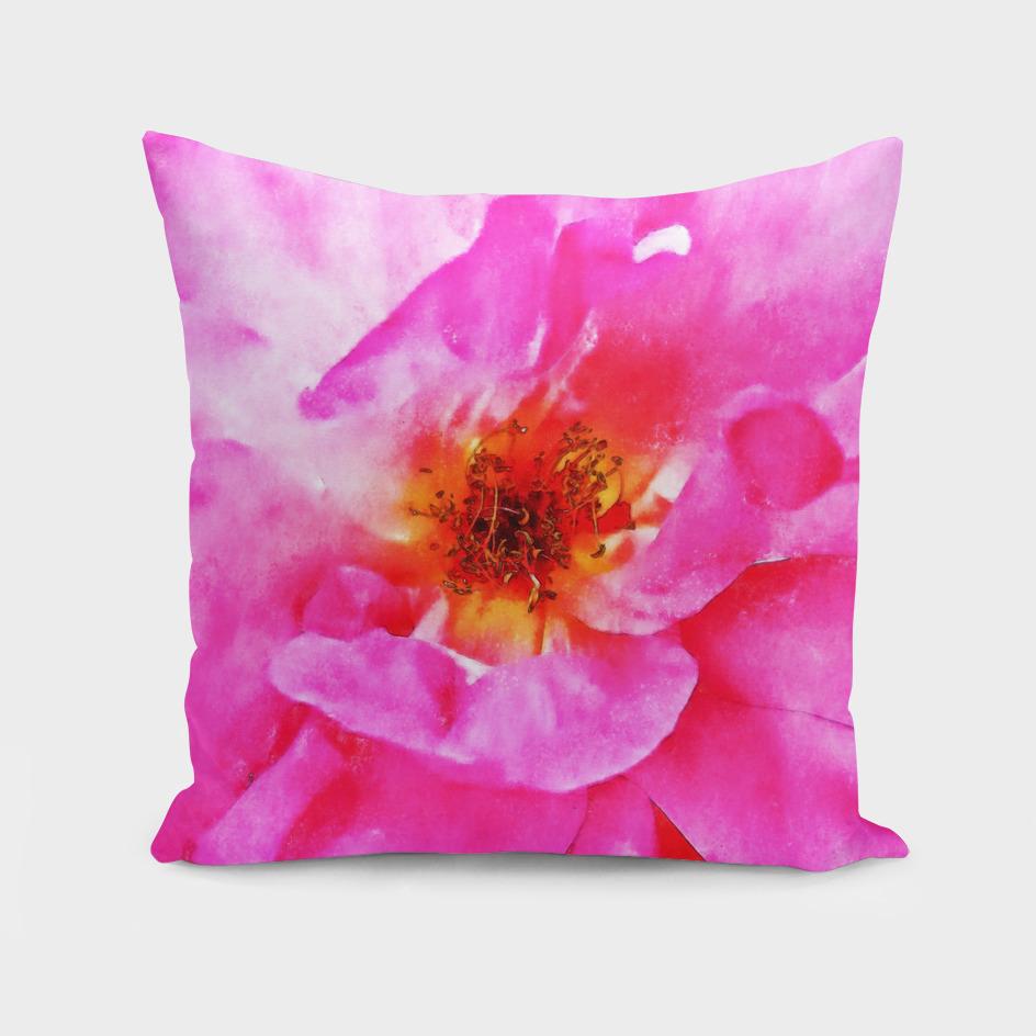 Closeup Pink Rose Fine Art