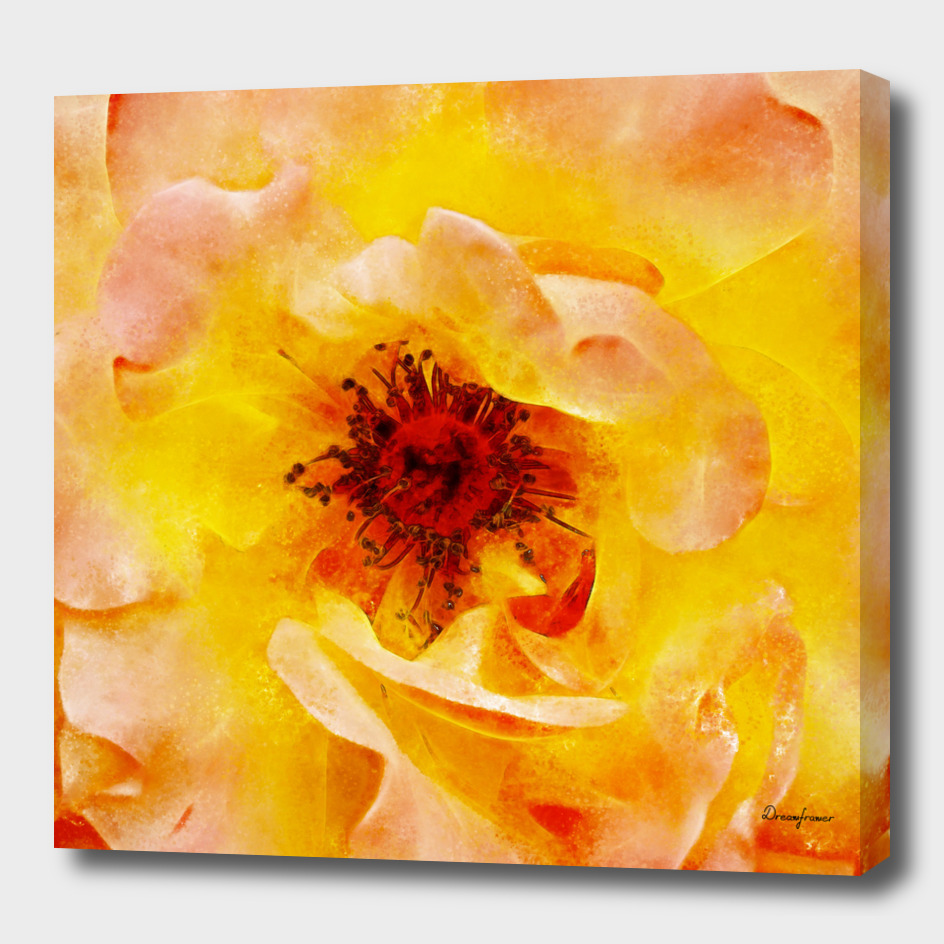 Closeup Peach Rose Fine Art