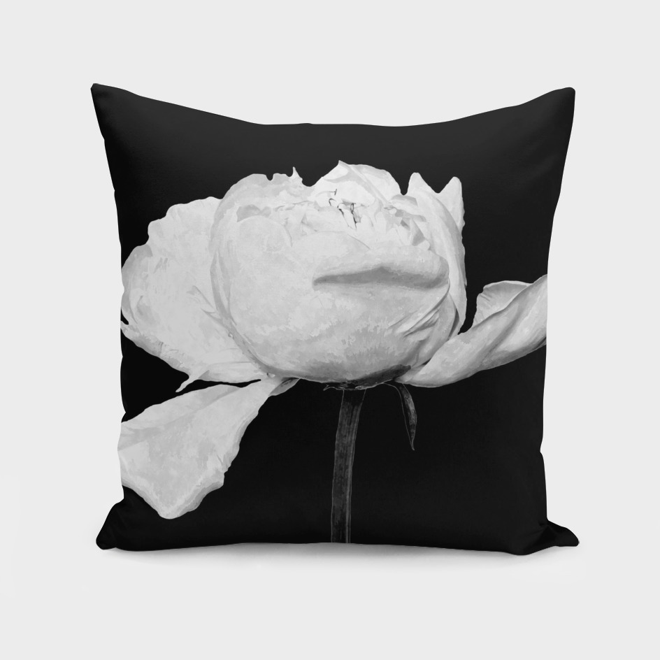 White Peony Black Background