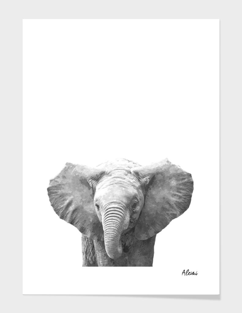 Black and White Baby Elephant