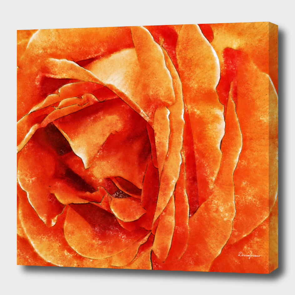 Closeup Orange Rose Fine Art