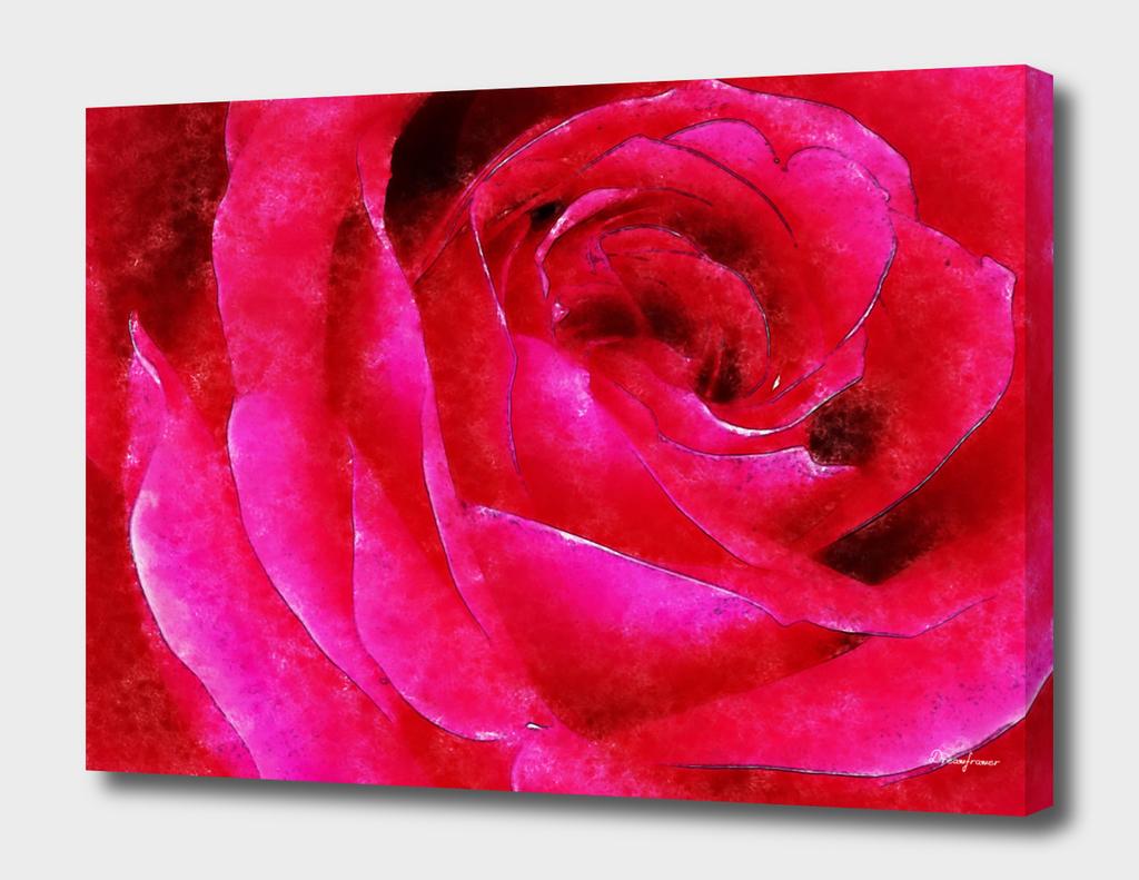 Red Rose no sig
