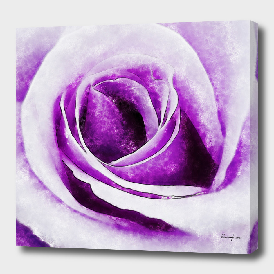 Closeup Lavender Rose Fine Art