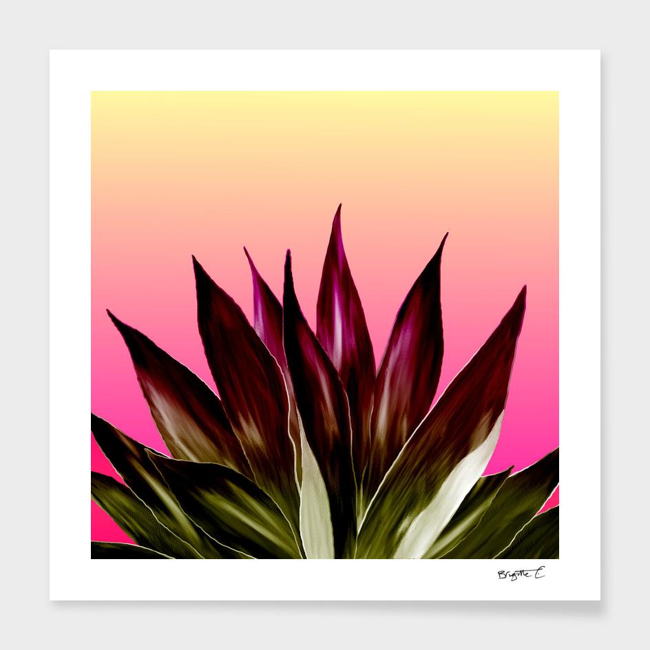 Bold Sunset Agave Fringe Illustration