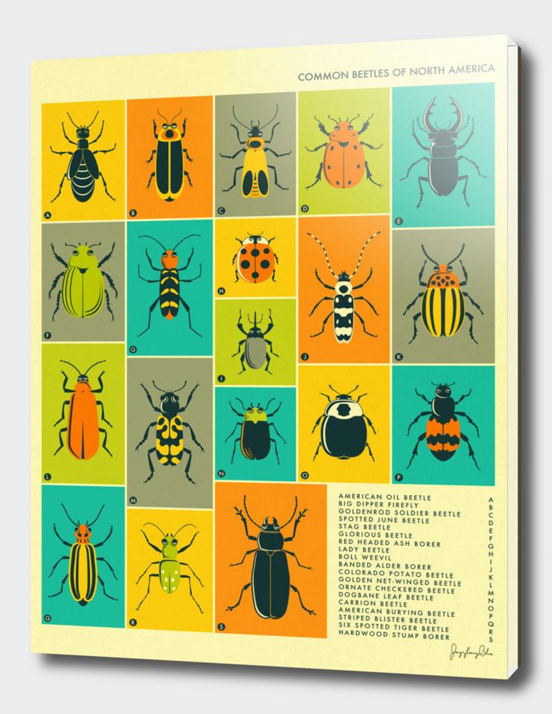 Common Beetles of North America