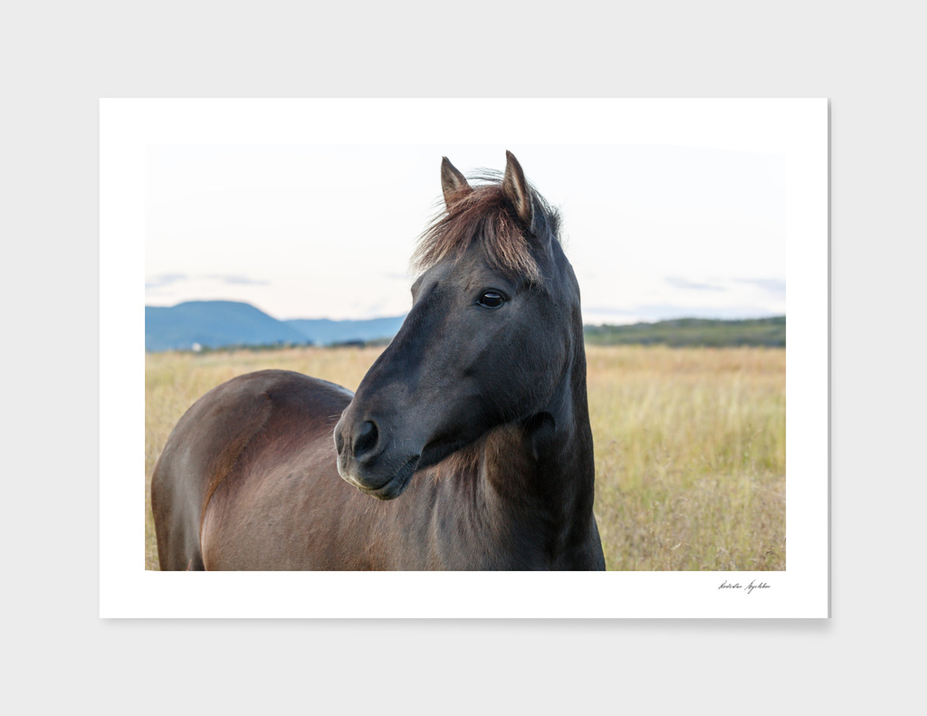 A horse is in the nature.