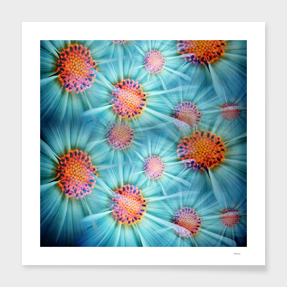 cosmea flower pattern