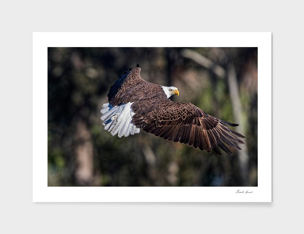 Beautiful Eagle Pose
