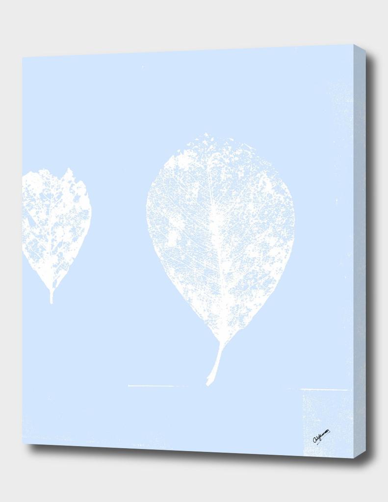 Pastel Blue skeleton leaves (balloon leaves)
