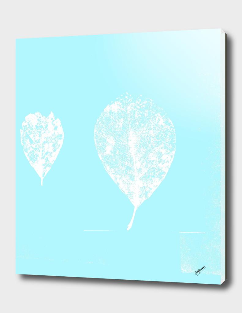 Pastel Turquoise skeleton leaves (Balloon leaves)