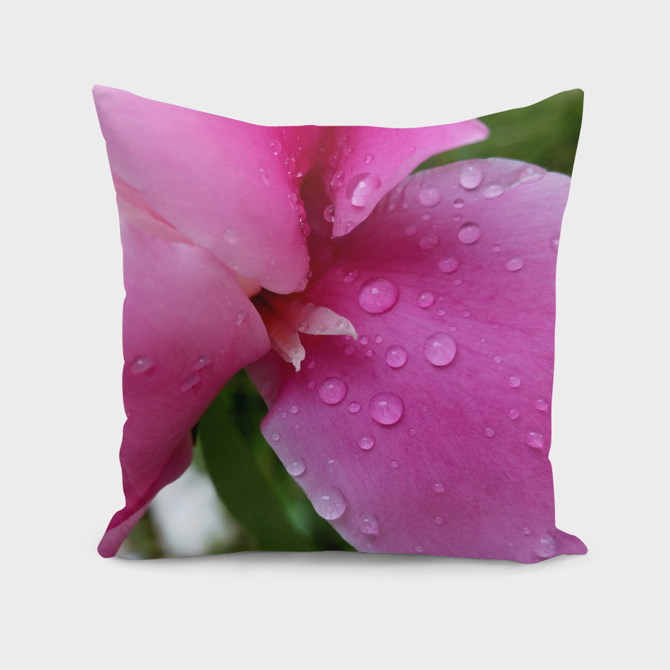 stray petal in the rain