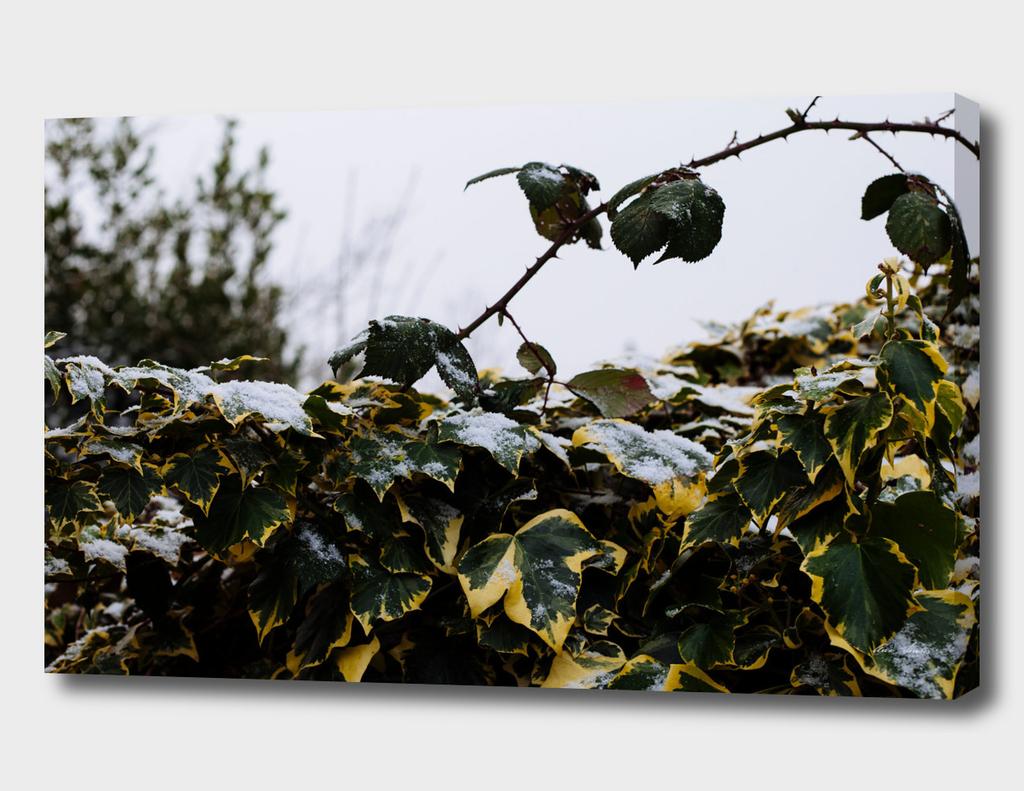 Neve em Londres - 7