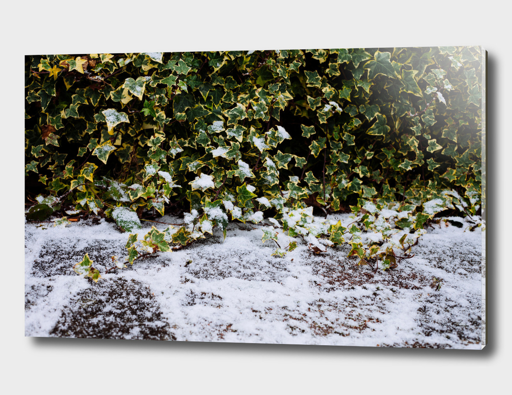 Neve em Londres - 8
