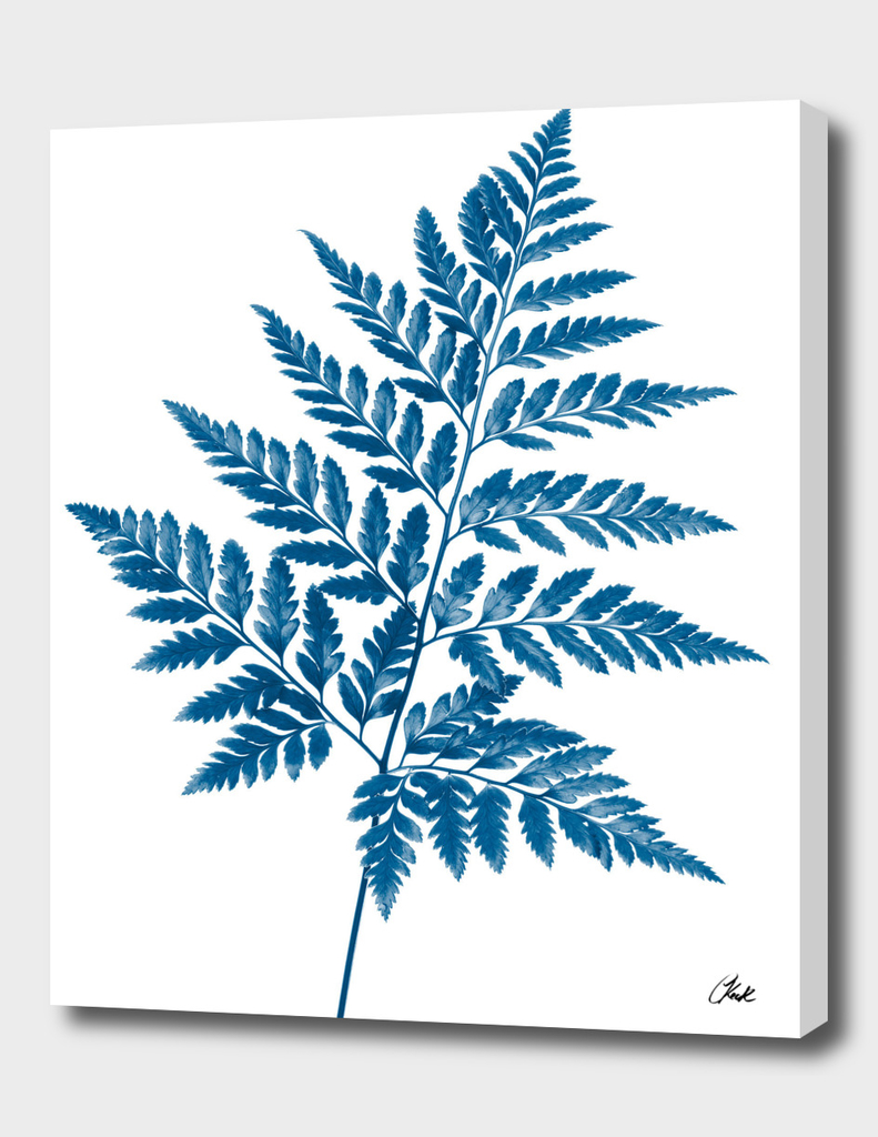 Blue Fern