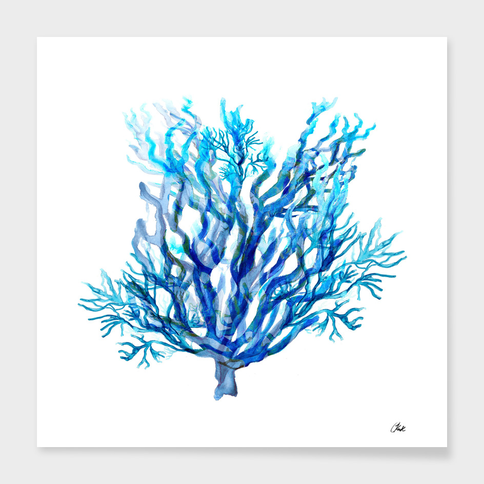 Simply Blue Coral