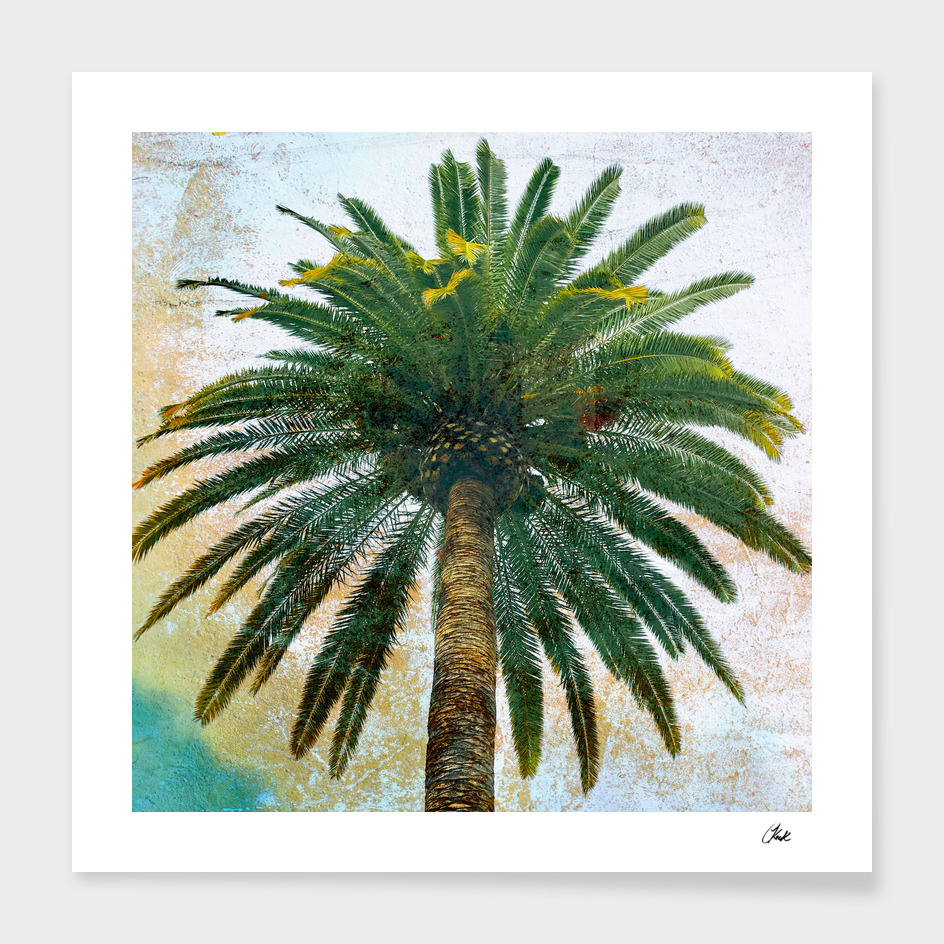 King Palm Square Green