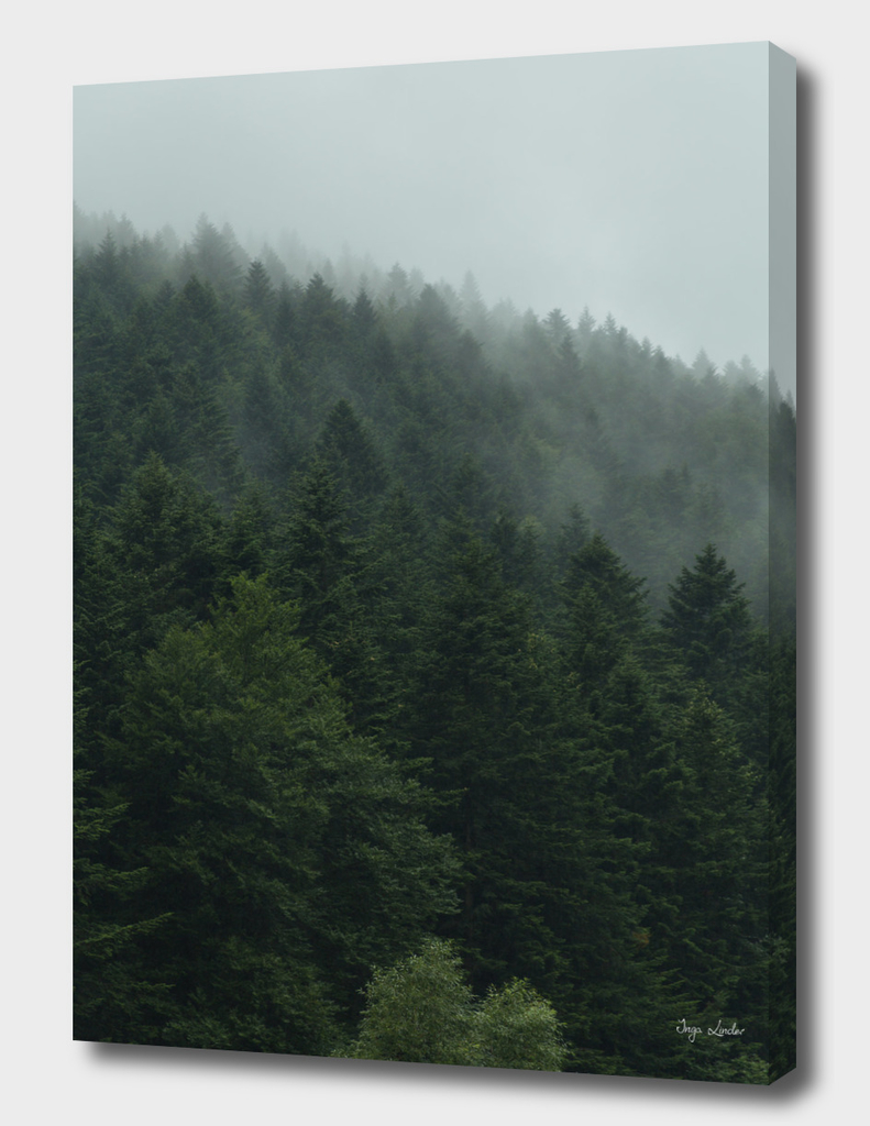 Misty landscape with foggy forest