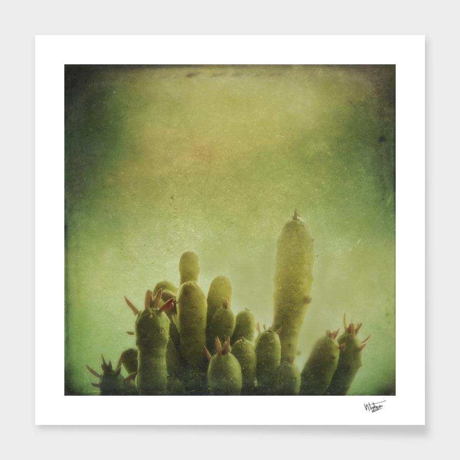 Cactus in my Mind
