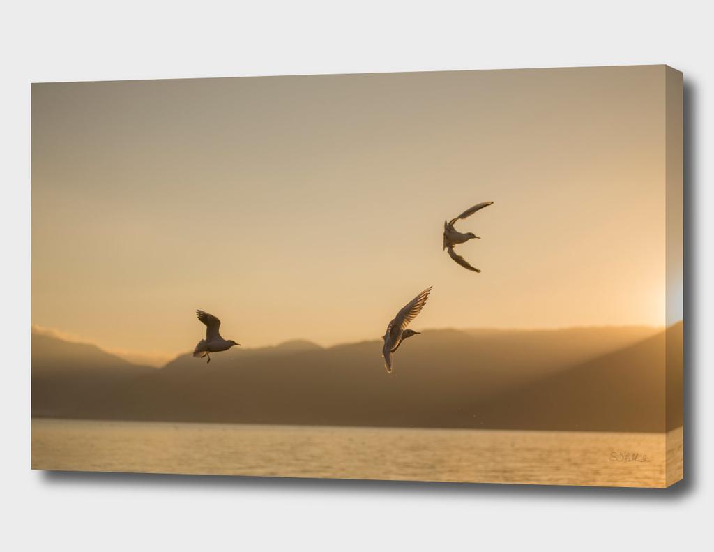 Three seagulls over a lake