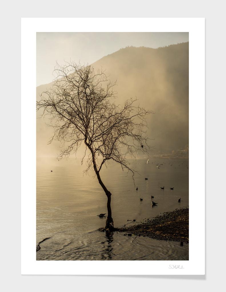 Stark tree in morning mist