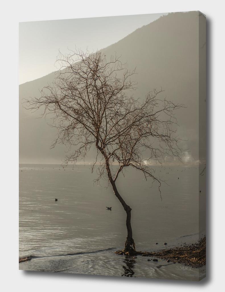 Stark tree in morning mist 2
