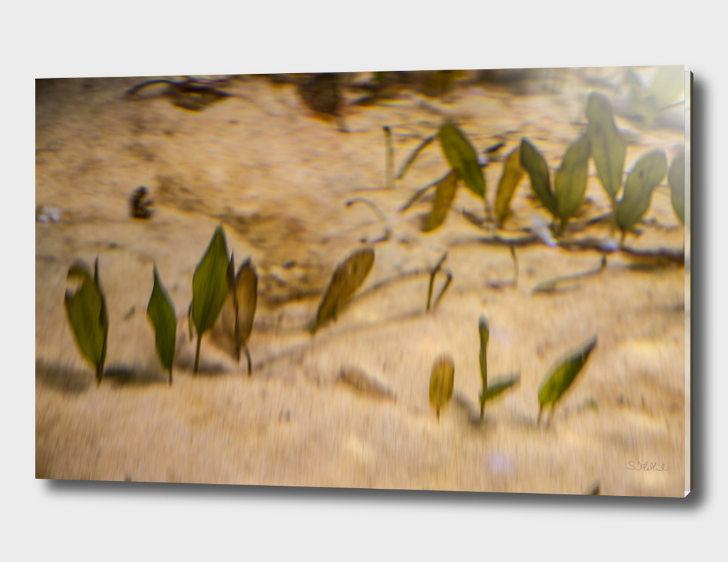 Blurry seaweed