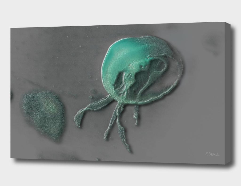 Jellyfish on grey