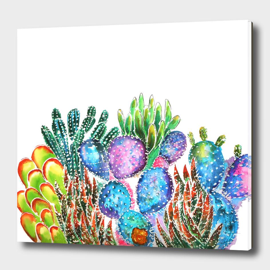 Cactus Rainbow