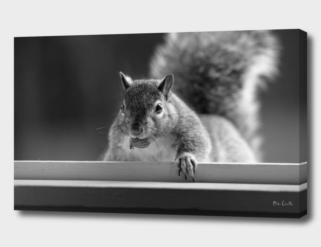 One Peanut One Squirrel