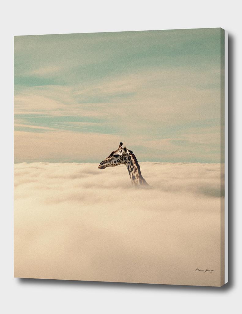 I'm a giraffe, I can