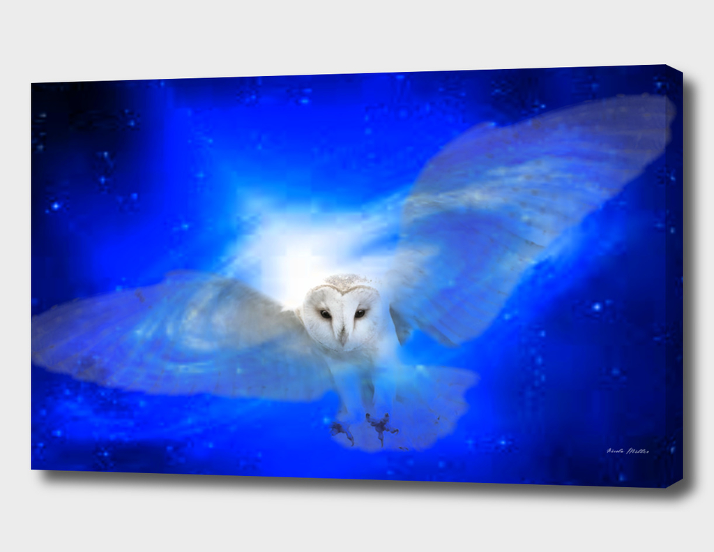 space-owl