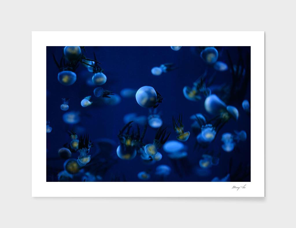 the stars in ocean