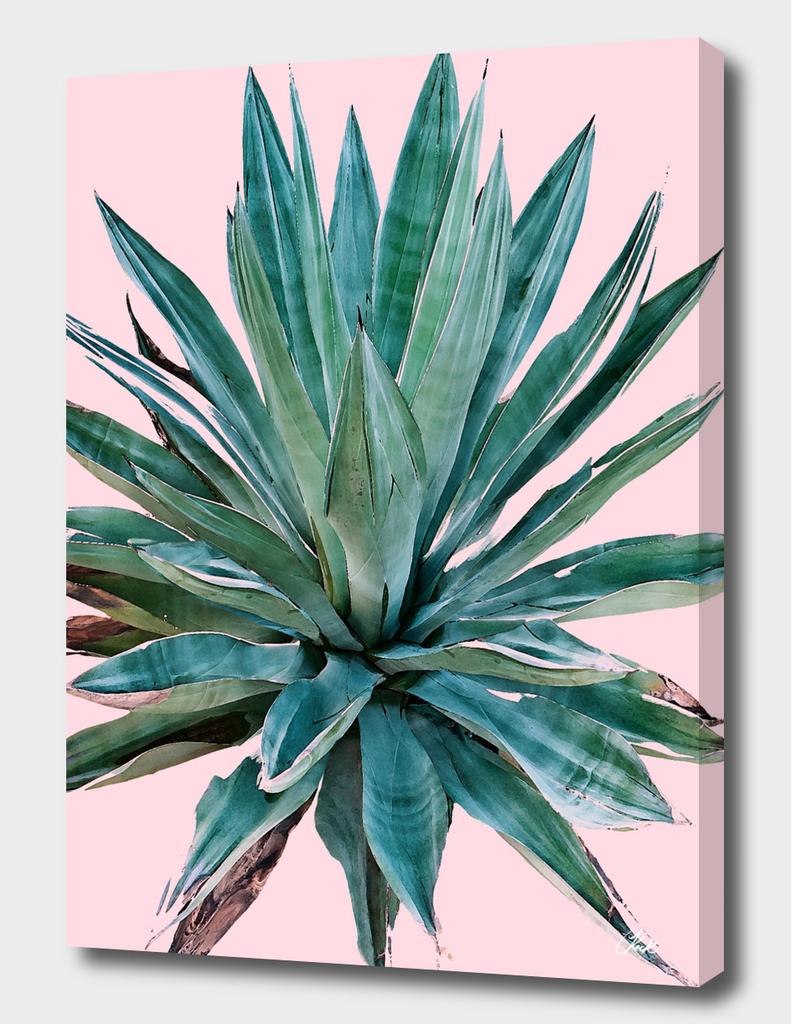 Desert Agave Pink
