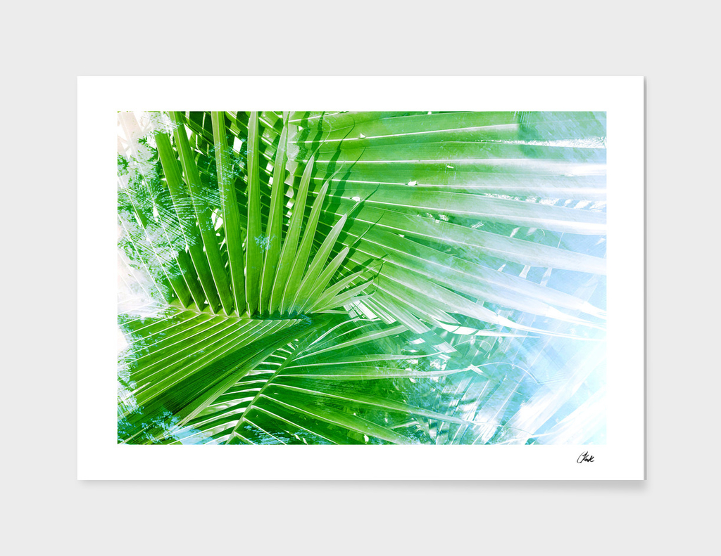 Palm Leaves Green