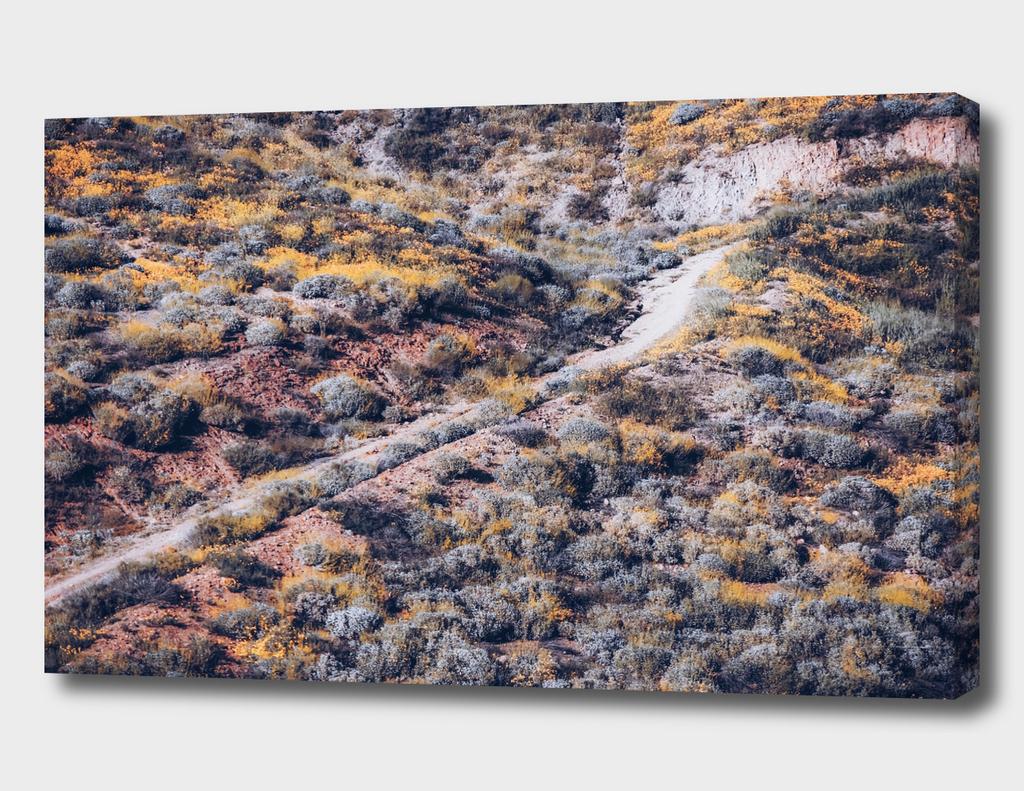 poppy flower field on the mountain