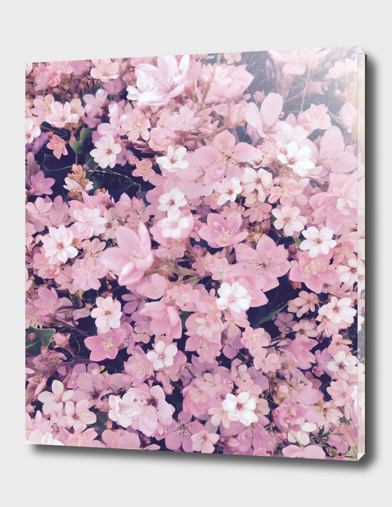 blooming pink flower texture pattern abstract