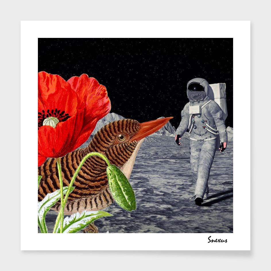 Bird on the moon #digitalcollage