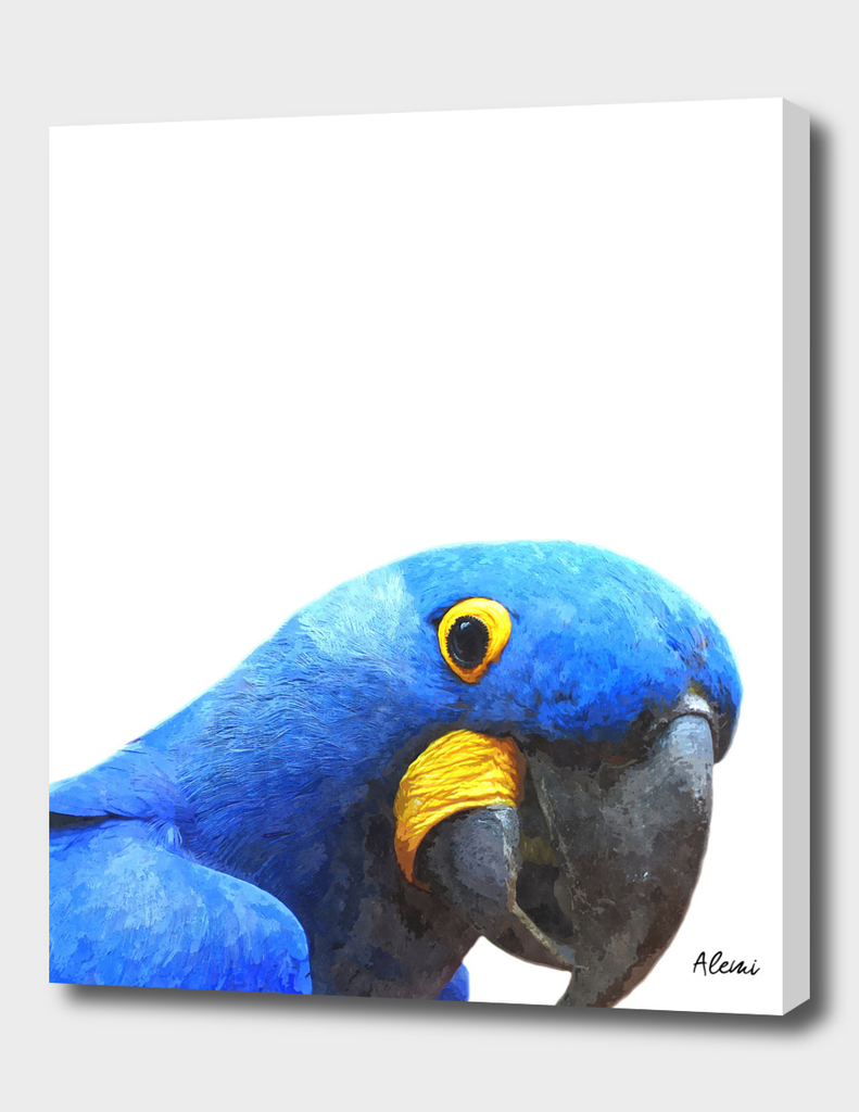Blue Parrot Portrait