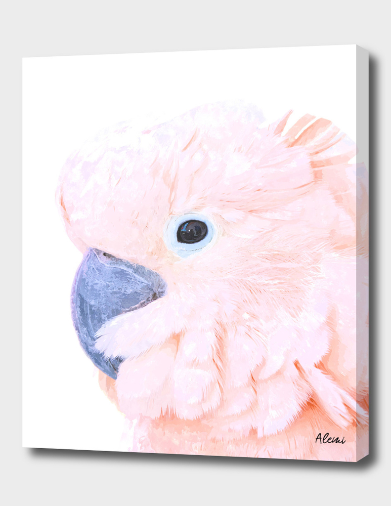 Pink Cockatoo Portrait