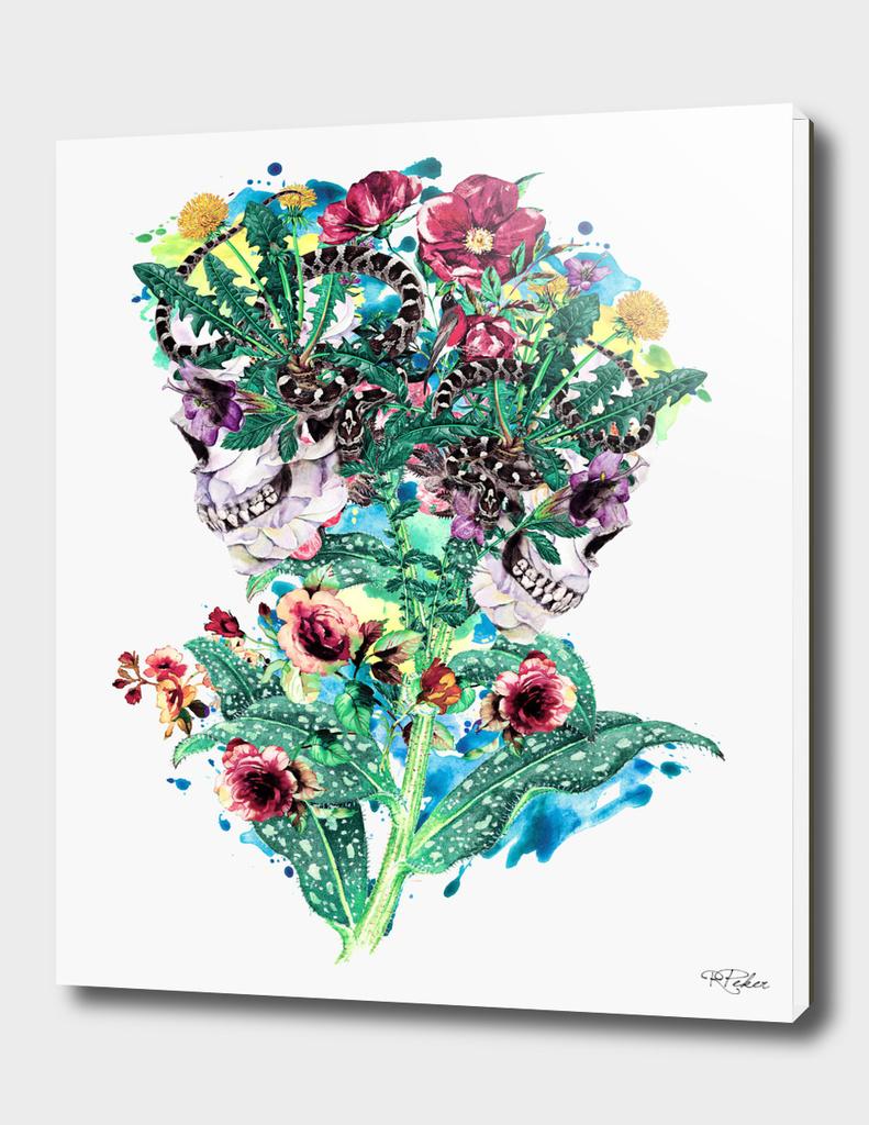 Skull BS