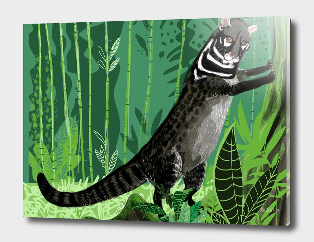 Civets : Tangalunga (Viverra tangalunga)