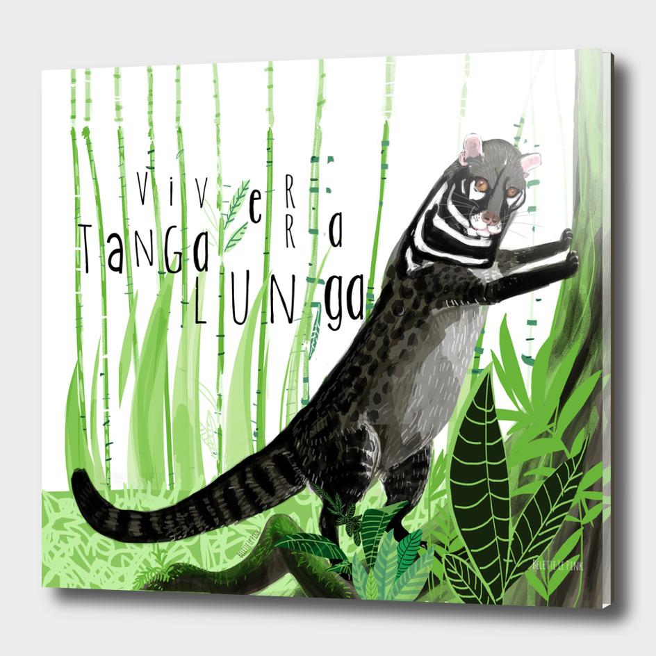 Civets : Tangalunga (Viverra tangalunga) Typo