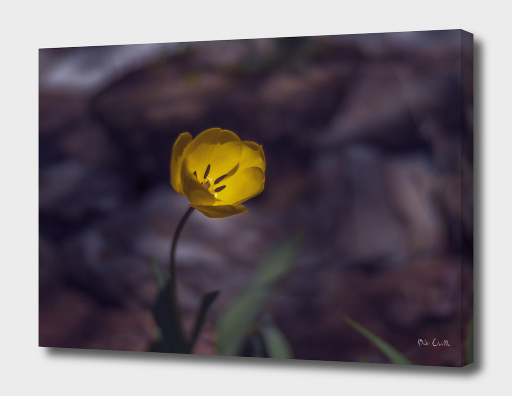 Yellow Tulip In The Forest