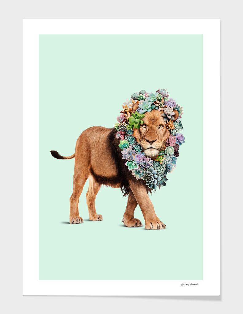 SUCCULENT LION