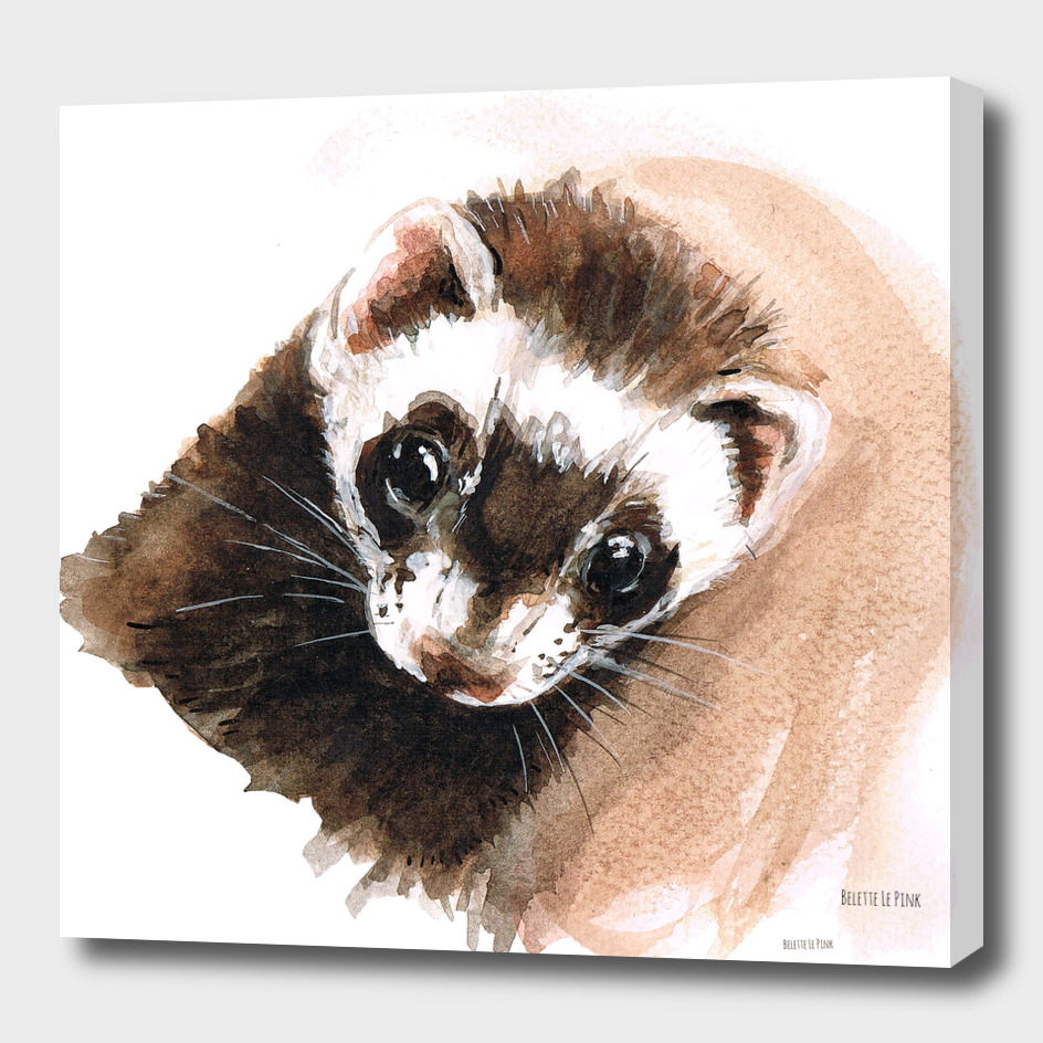 Little Samara Eyes Ferret