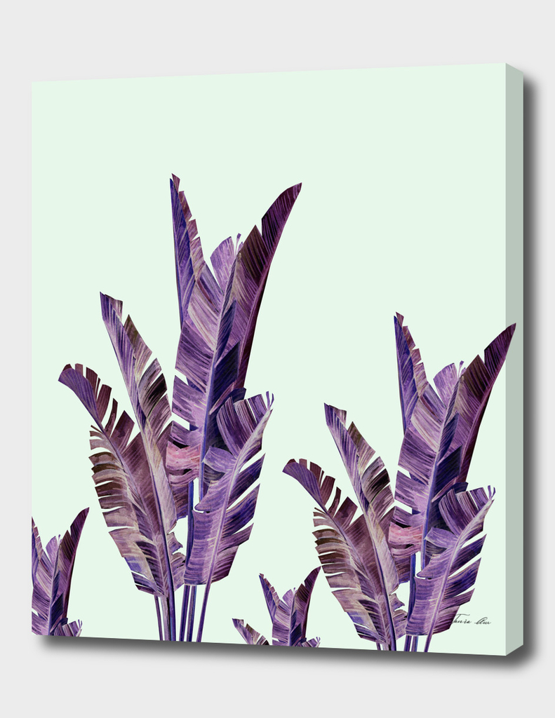 Banana laves purple