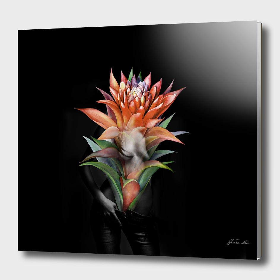 Erotic Guzmania flower