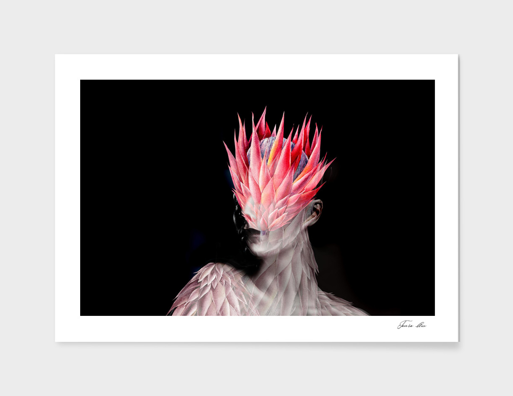 Tropical protea flower