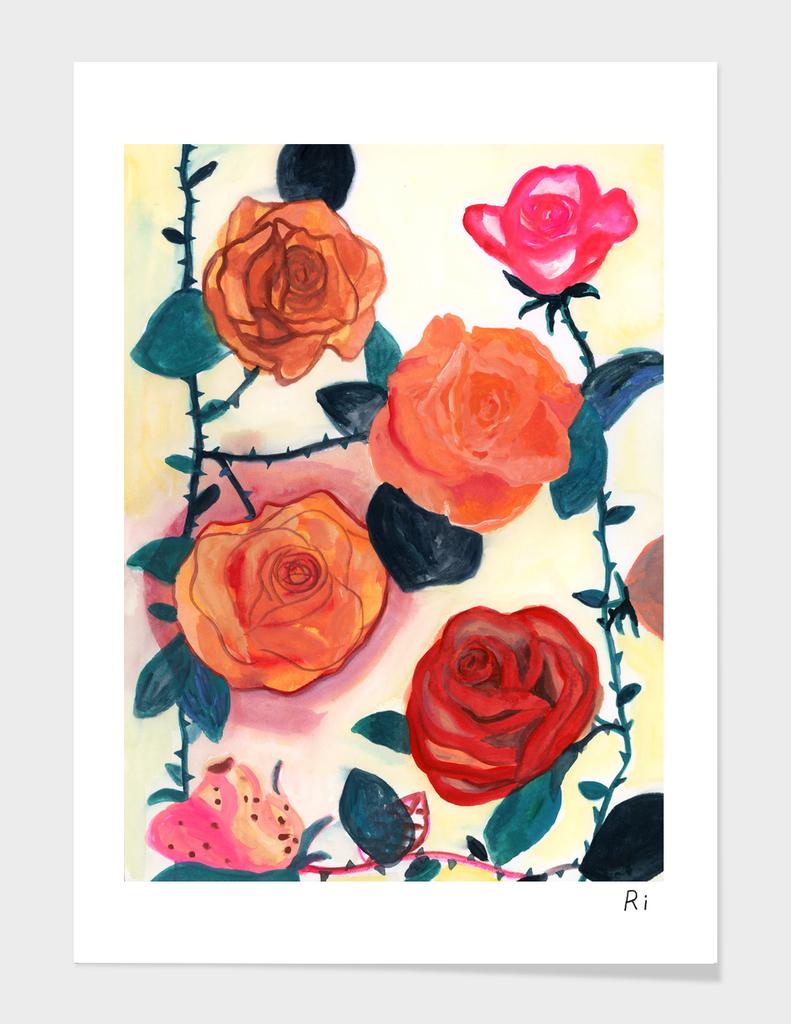 Roses' hedges